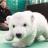 可愛的BB北極熊 (Cute baby polar bear)